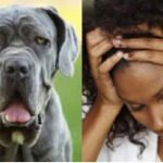 """""""I had 3 head-cracking orgasms during sex with a dog, now I get wet whenever I see dogs"""" - Student seeks advice"""